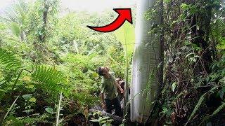 Download Video Nekat Jelajahi Hutan, Pria ini KAGET!! Saat Melihat Penampakan Pohon Pisang Raksasa ini! MP3 3GP MP4