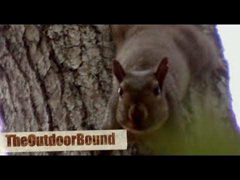 Squirrel vs 22 Rifle
