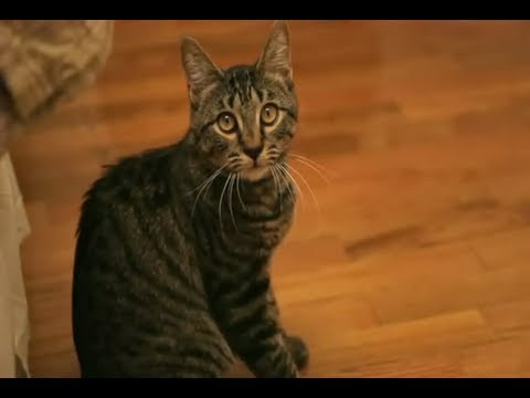 Signs of Cat Health with Dr. Manning – Purina ONE® True Nature