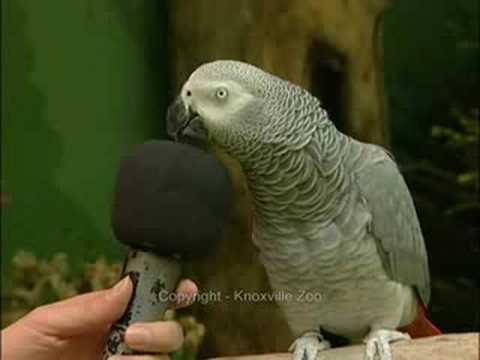Most Amazing Talking Bird!