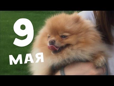 9 мая, велики, пёсики и ВДНХ!!!! (видео)