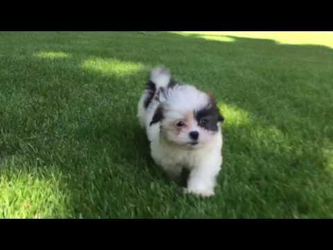 Daisy is the cutest little girl