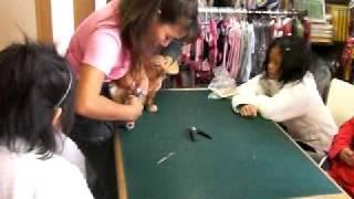 愛犬の美容教室