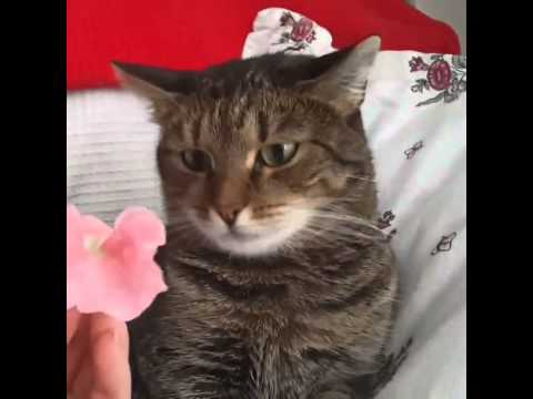 A flower crashes into a cat (16 sec)