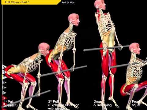クリーン動作での骨の動き