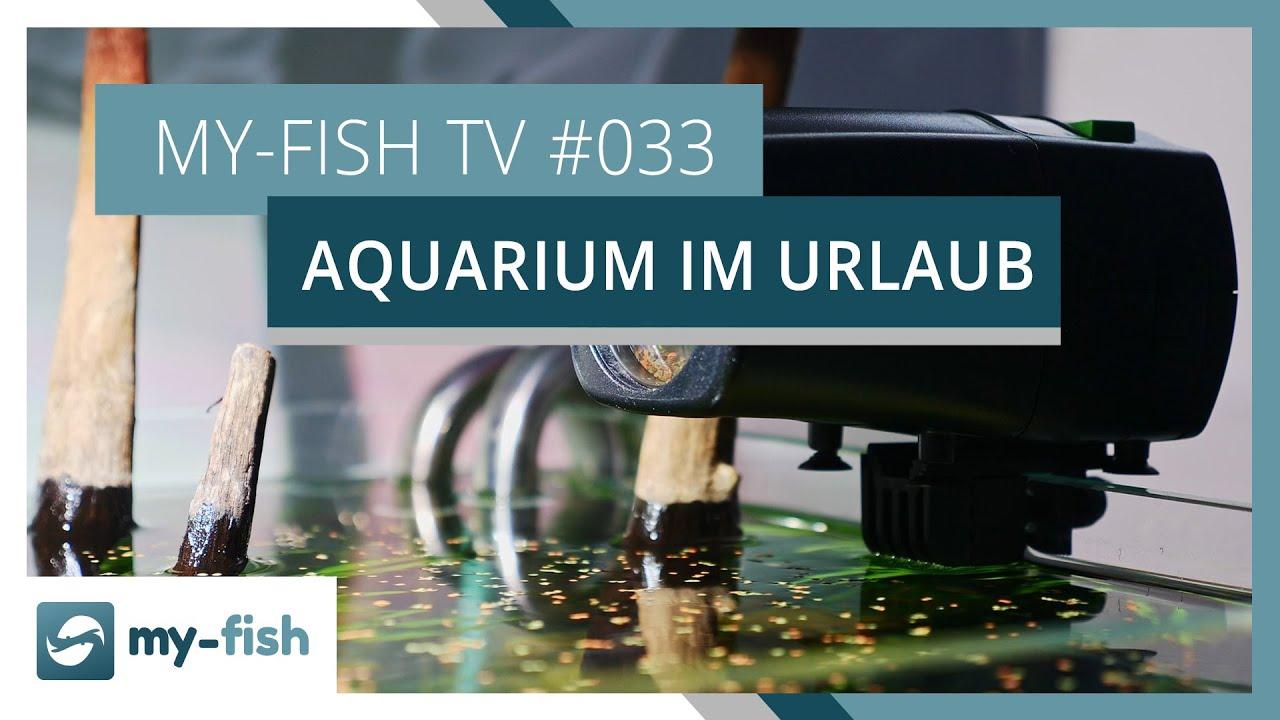 my-fish TV - Deine Nr. 1 Anlaufstelle für alle Themen rund um die Aquaristik 31