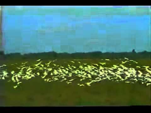 Lagoa da Confusão  1996