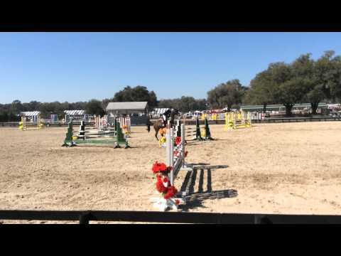 For Sale Equitation Horse NJ, PA,FL