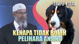 Video Kenapa Islam MELARANG PELIHARA ANJING? | Dr. Zakir Naik MP3, 3GP, MP4, WEBM, AVI, FLV Juni 2019