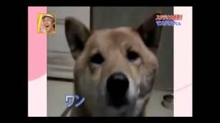 Właścicielka poprosiła psa, żeby szczekał troszkę ciszej! Reakcja zwierzaka bardzo Cię zaskoczy!