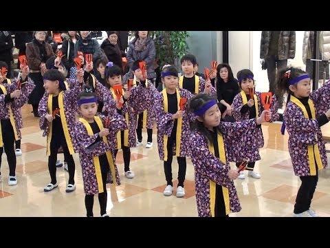 油川幼稚園◇あぶらかわ音頭YOSAKOI◇マエダガーラ◇20111203