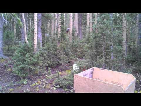 Sasquatch Sighting in a Forest in Utah