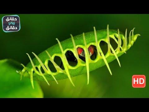 العرب اليوم - شاهد: نباتات عجيبة تمتلك