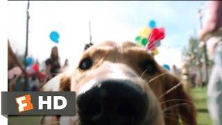 Nonton A Dog S Purpose  2017    Doggie Matchmaker Scene  3 10    Movieclips Film Subtitle Indonesia Streaming Movie Download