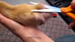 How To Trim Your Dog's Feet