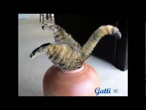 gatti divertenti - compilation