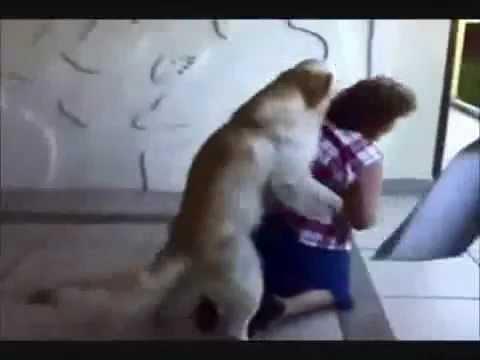 pies wita pania bardzo nietypowo