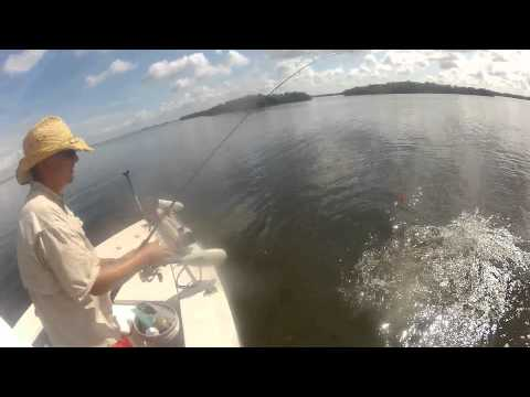 Inshore Slam in the Tampa Bay