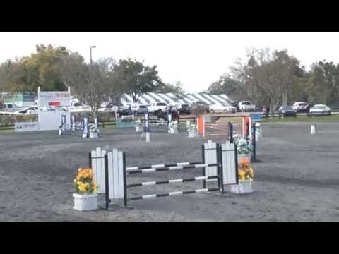 Child/Adult Horse for Sale NJ,PA,FL