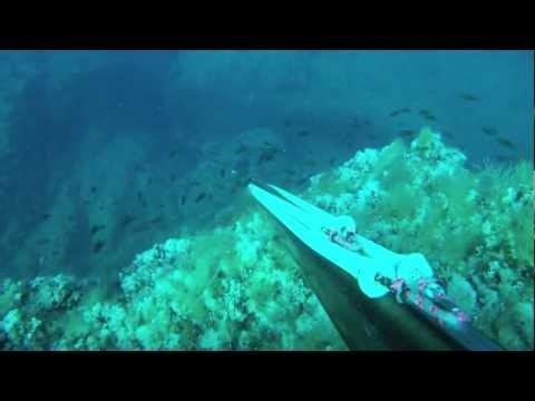 Corsica in Corsica-Sub  Spearfishing 2011( Partie 1)