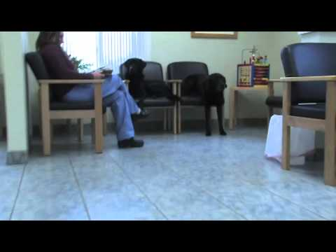 Burlington Emergency & Veterinary Specialists Hospital Tour