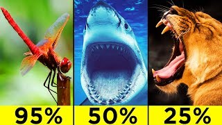 Video The Most Efficient Predatory Animals In The World MP3, 3GP, MP4, WEBM, AVI, FLV Maret 2019