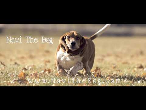 Basset Hound Running in SlowMotion