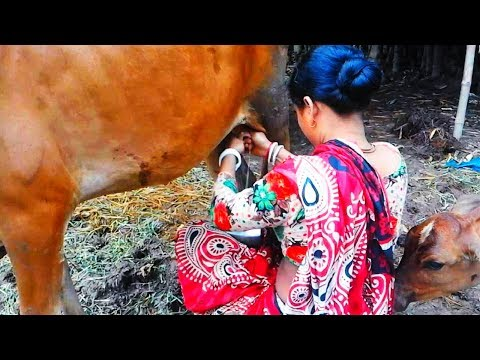 Video Milking by village woman | Milking cows by hand | Village style milking download in MP3, 3GP, MP4, WEBM, AVI, FLV January 2017