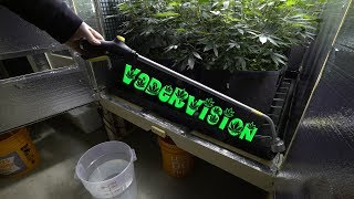 2018 Cali Legal Grow * Day 73 *  Upgrading the Watering System for Living Soil by VaderVision