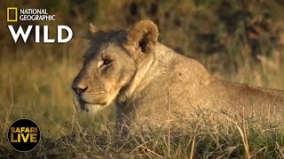 Safari Live - Day 274 | Nat Geo Wild by Nat Geo WILD