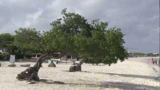 Eagle Beach Aruba  city photos gallery : Eagle Beach, Aruba