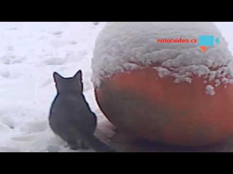 kotata na snehu