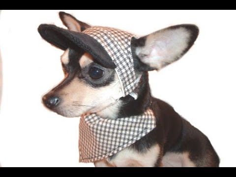 ✂  Dog Sports Clothing (Pt. 1/2): How To Make Simple Dog Hat In 10 Min ♡