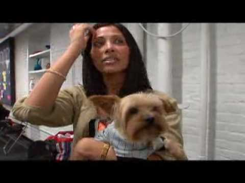 Yorkiepuppies Youtube on Of The Yorkshire Terrier Created By Animal Planet It Offers More