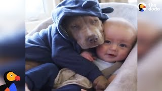 Sweetest Pit Bull Snuggles His Baby Brother | The Dodo by The Dodo