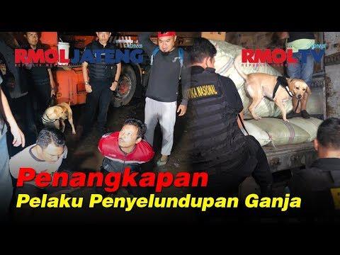 Penangkapan 5 Pelaku Penyelundupan 250 Kg Ganja