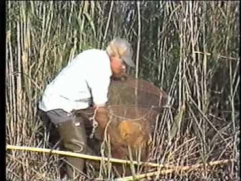 Pesca d'anguila i cranc