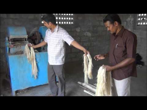 Banana Fibre Extraction