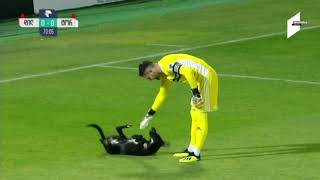 Dog interrupts soccer game, wants belly rubs