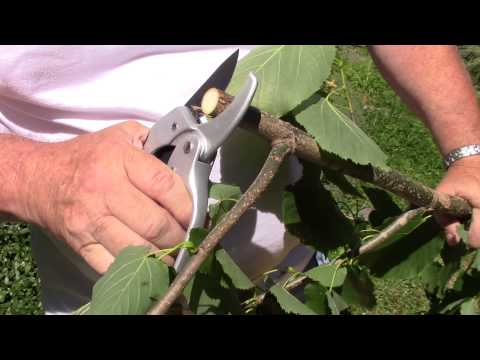 Ratchet Pruners By The Gardener's Friend -How To Use