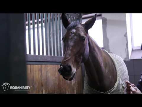 Equanimity – Spokojny, opanowany i zrównoważony koń