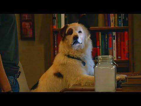 Собака точка ком (Сезон 3 Серия 21) (видео)