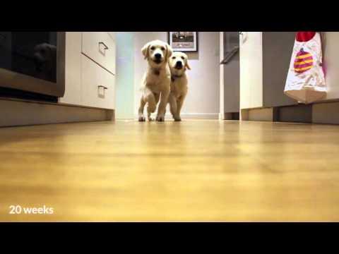 il cambiamento di due cuccioli da 10 settimane a 9 mesi di vita!