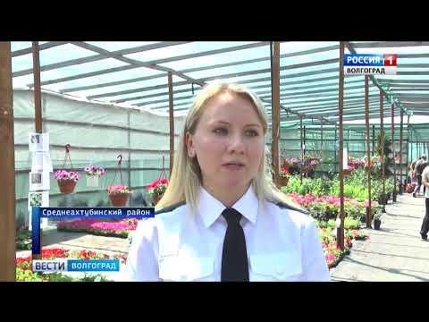 О проверке цветочной рассады на наличие карантинных вредителей в Волгоградской области