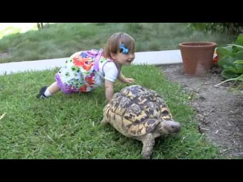 video of a beautiful friendship between a little girl and her turtle!