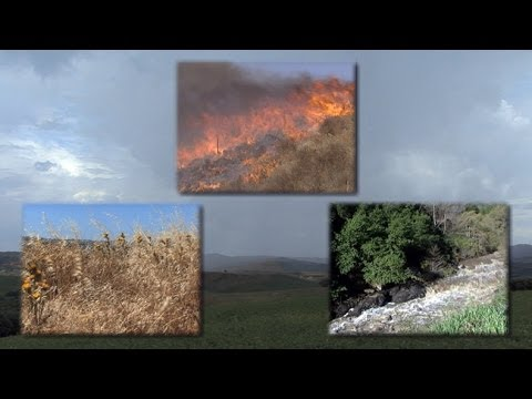 drought - Visit: http://www.uctv.tv/) Explore how the the nature of highly seasonal rainfall cycles and periodic fires create conditions that have shaped Mediterranea...