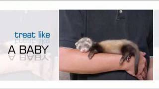 Guide For Ferret Pet Owners
