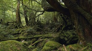 Yakushima Japan  city pictures gallery : Yakushima, Japan 4K (Ultra HD) - 屋久島