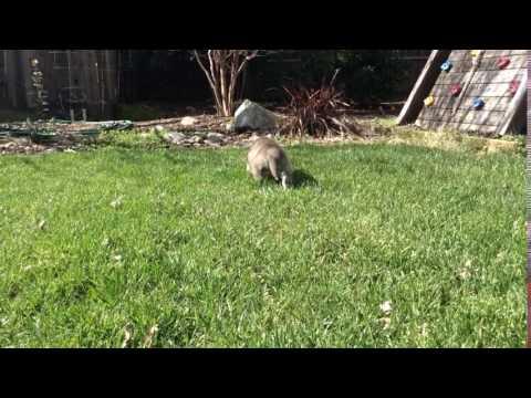 Playing.....in....backyard
