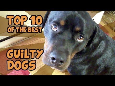 Τα πιο ένοχα σκυλιά